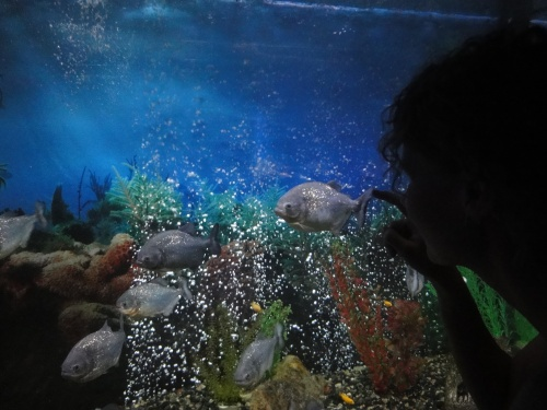 Океанариум в Кабардинке