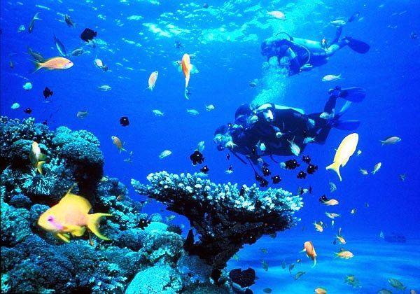 Подводный мир открытый дайверами