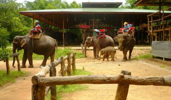 Прогулка на слонах, доступное развлечение в Тайланде