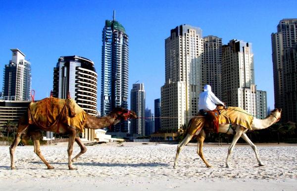 Корабли пустыни среди небоскребов, ОАЭ