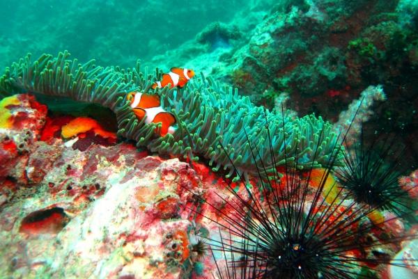 Подводный мир в Тайланде удивителен везде: Пхукет или Паттайя, Краби или Самуи