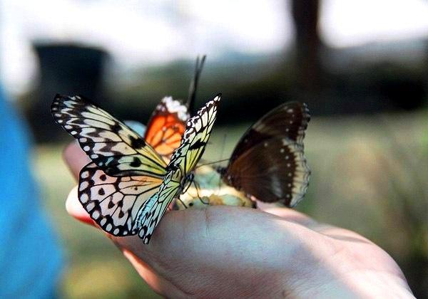 Сад бабочек на острове Пхукет