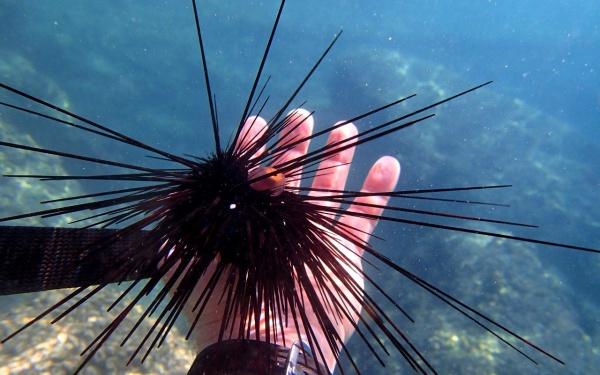 Южно-Китайское море, один из Вьетнамских подводных обитателей