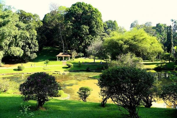 Все тот-же ботанический сад в Шри-Ланки, который находится рядом с городом Канди