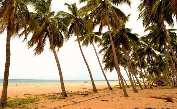 Шри Ланка в летний период времени, пальмы и пляж Калькуда