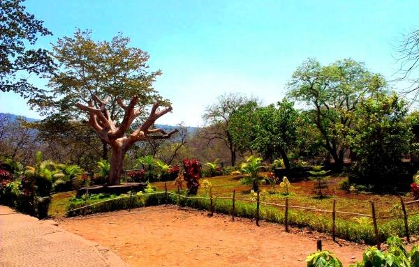 Национальный парк в Бомбее вы обязательно посетите на экскурсии