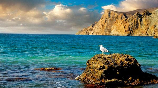 Чайки, море, Крым