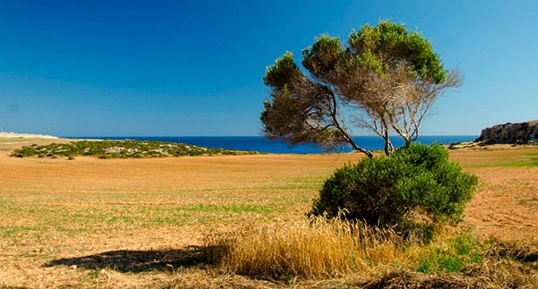Голубое море, выжженные поля, зеленые островки, Кипр в Мае