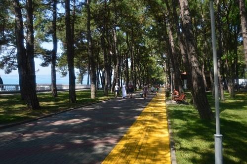 Пицундские сосны на Набережной, Геленджик