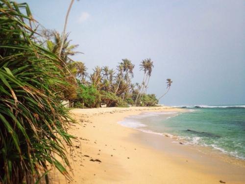 Где отдохнуть в Шри-Ланке