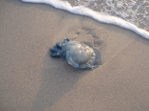 тунис джерба медузы
