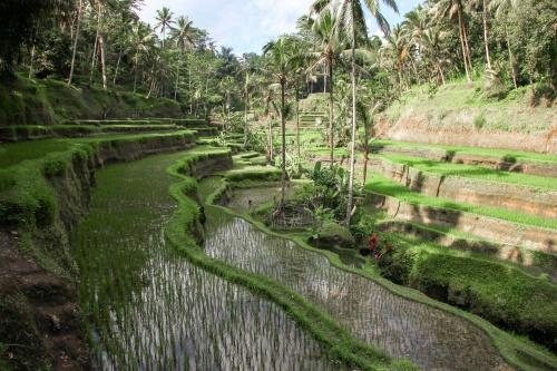 Август на Бали