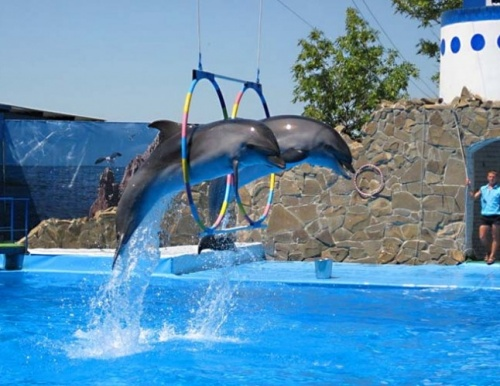 """Дельфинарий """"Театр морских животных"""""""